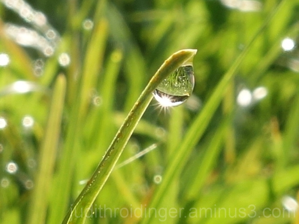 waterdrop on grass
