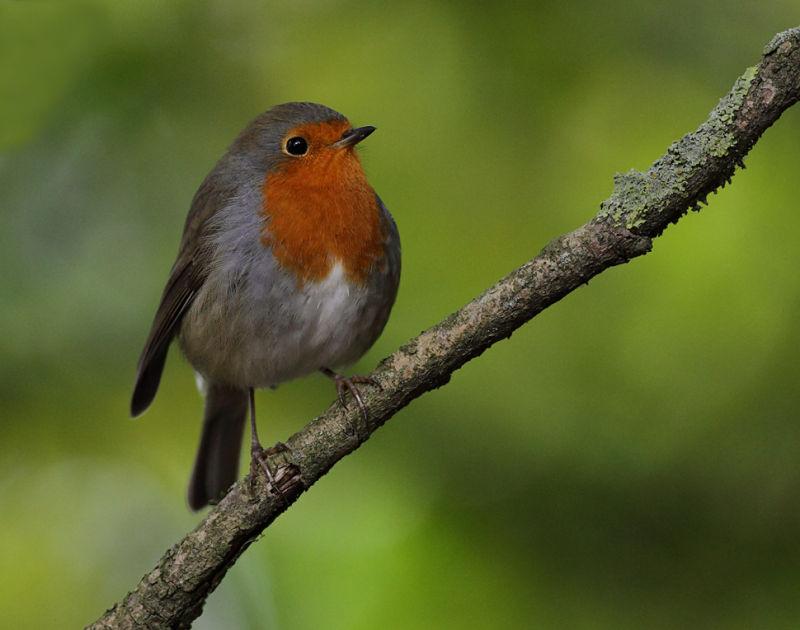 Robin Garden