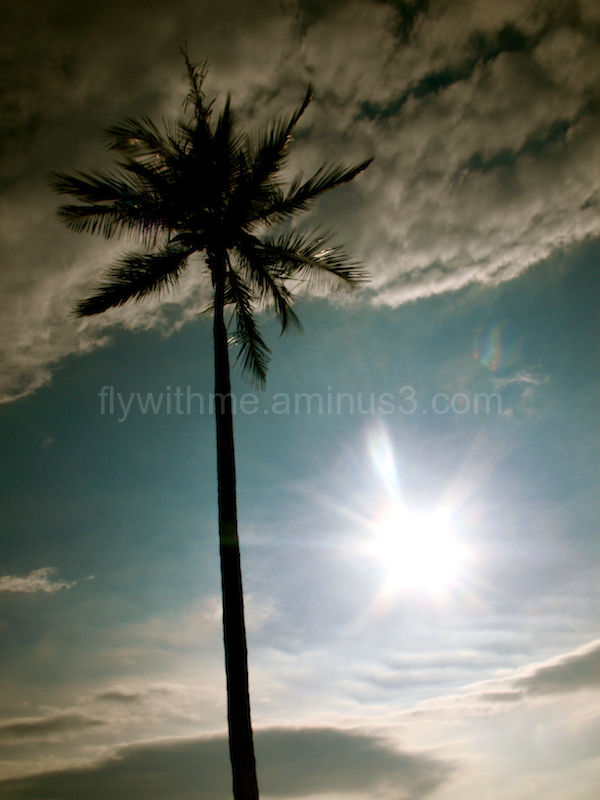 silhouette of single palm tree against a blue sky