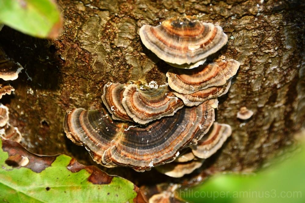 Fungi holding tight
