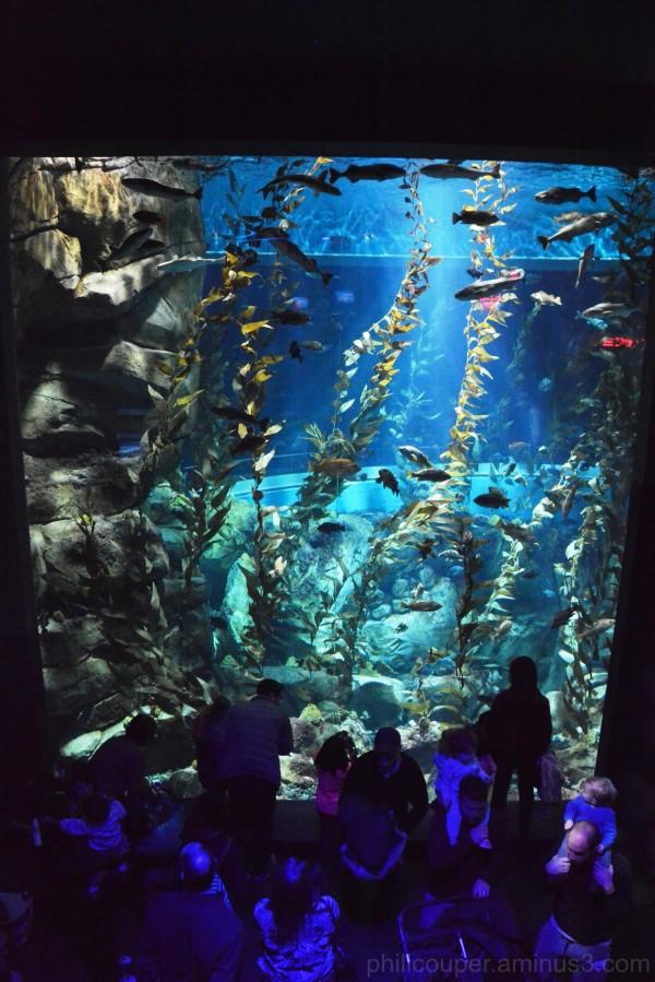 Canadian waters tank @ Toronto Aquarium