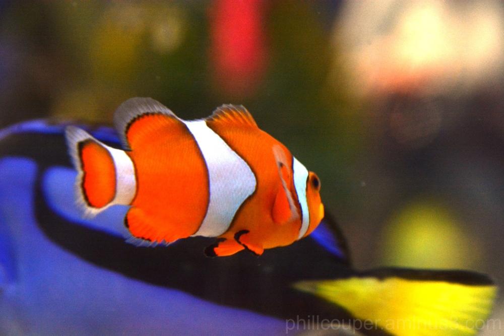 Clown Nemo & Tang Dory