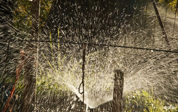 Garden Sprinkler #2