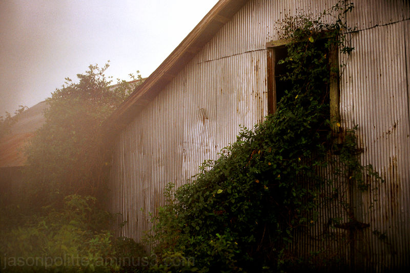 Overgrown shack in Mt. Pleasant, Mississippi