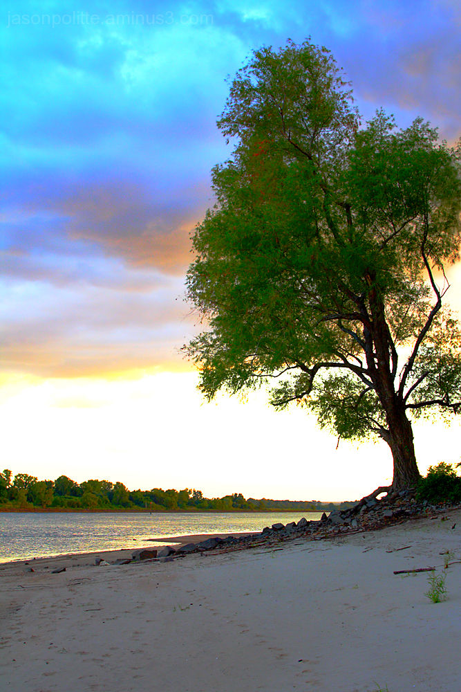 Tree at sunset on the beach of the Arkansas River