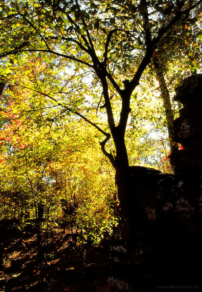 Fall colors at Devil's Den State Park