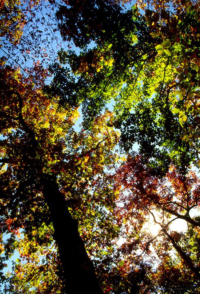 Fall colors at Devil's Den State Park