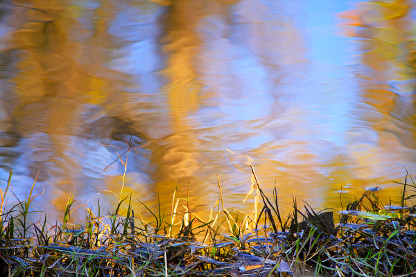Autumn colors reflected in pool of water.