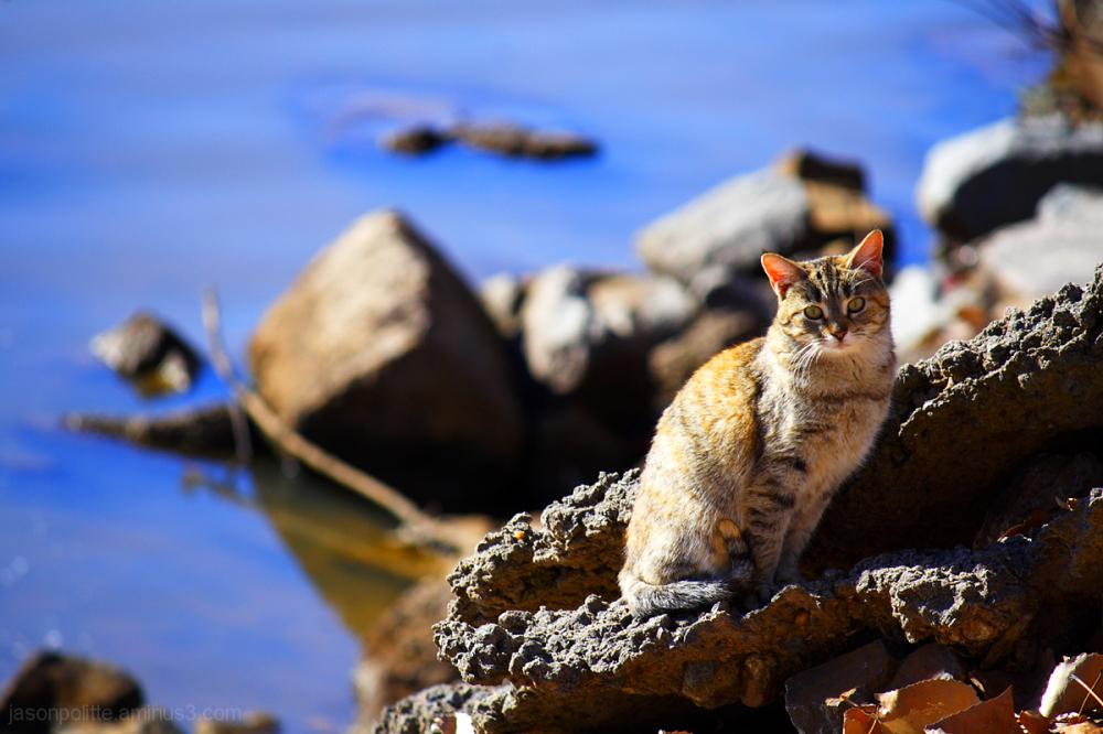 Stray female cat near the Arkansas River