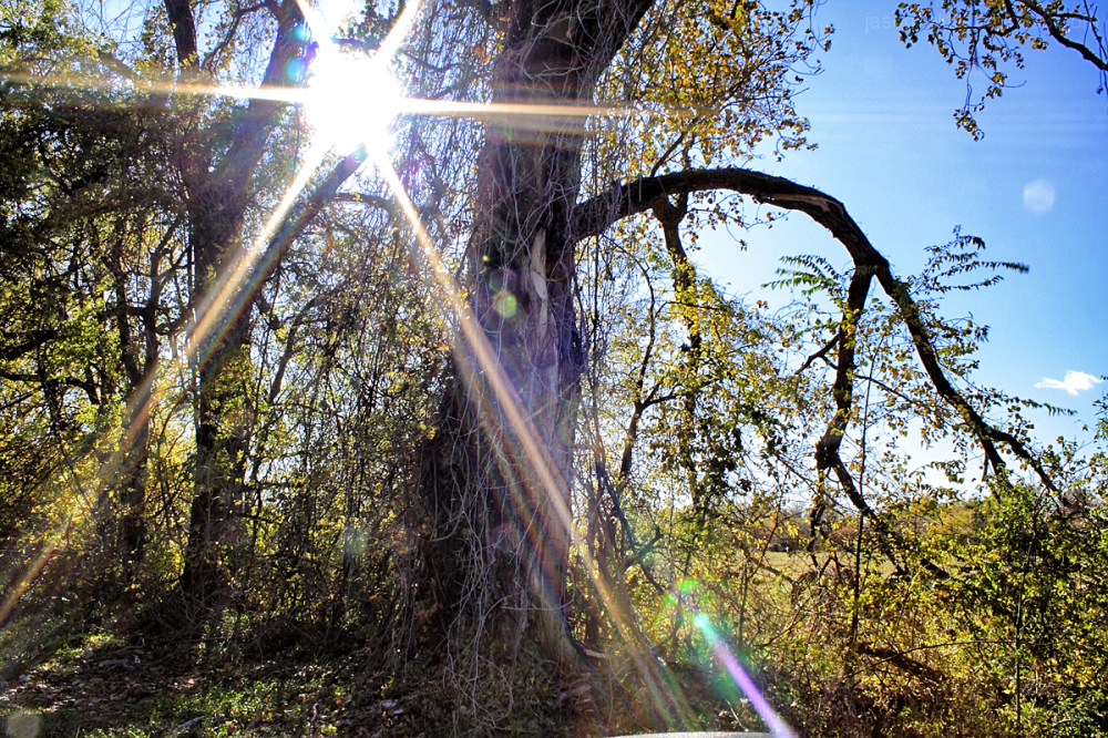 Sun's rays shine brightly through the trees