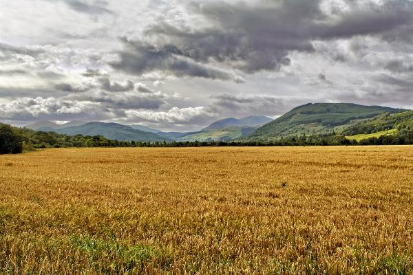 Scotland - Golden Fields and Green Hills