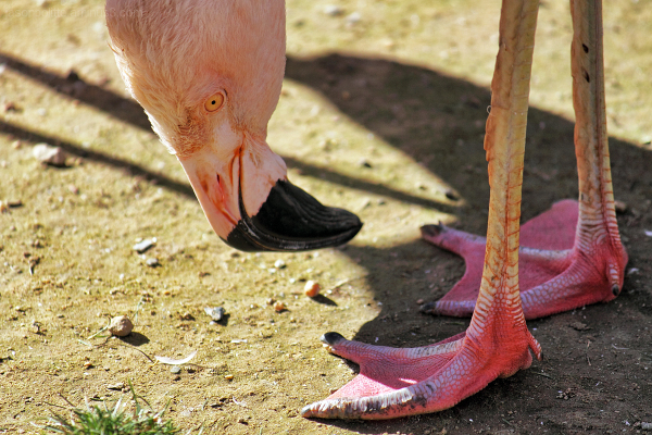 Pretty Pink Flamingo Feet