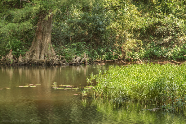 A Cypress Tree and reeds adorn this stream
