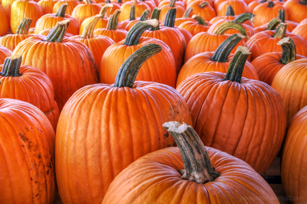Pumpkins Galore at Schaefers and Collins