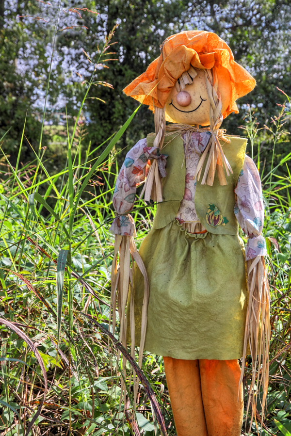 Scarecrow guarding the pumpkins