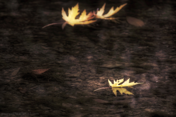 Autumn Mood - leaf floating in water