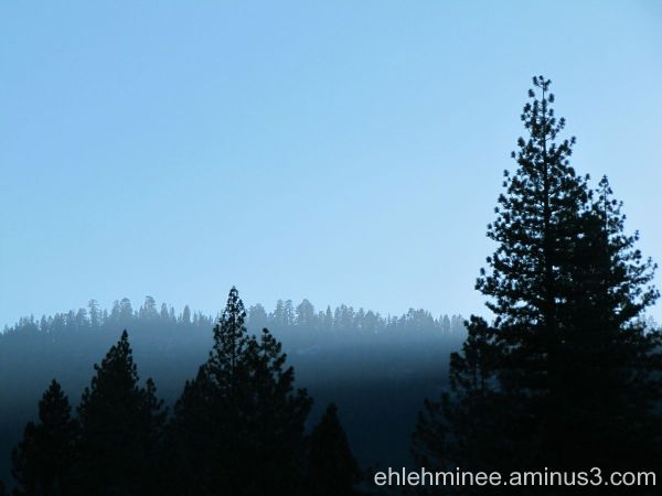 Smokey Pines in the mountains