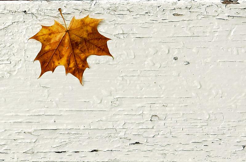 Sügisleht, Autumn leaf