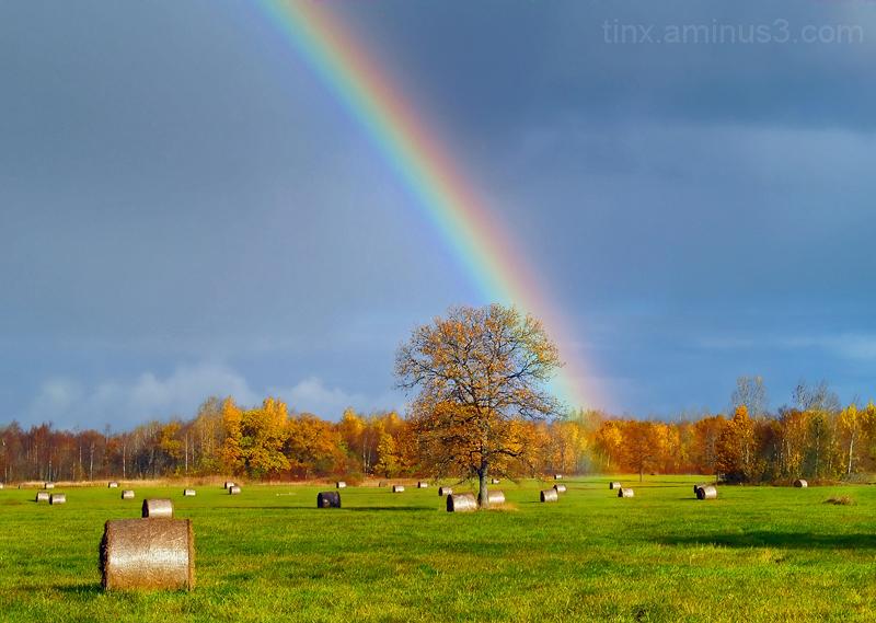 Vikerkaar, Rainbow