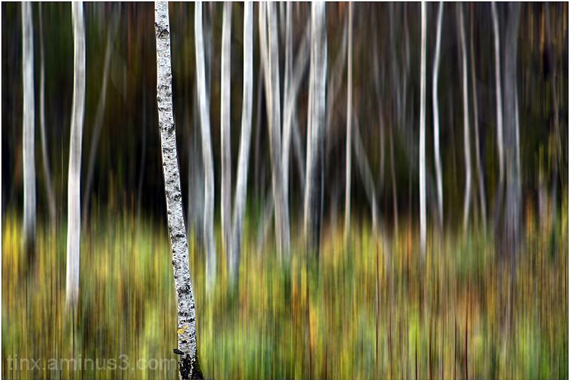 Puud, Trees
