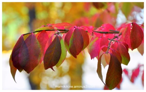 Couleurs flamboyantes, flamboyant colors