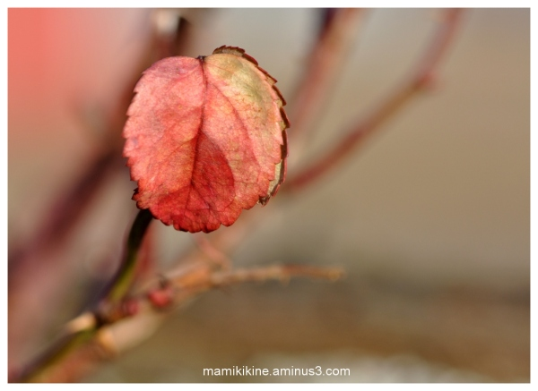 Petite feuille, small leaf
