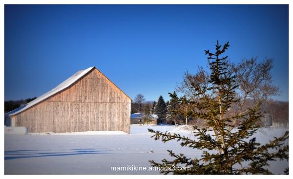 Journée glaciale, frosty day