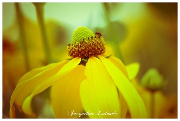 Une fleur vintage, a vintage flower