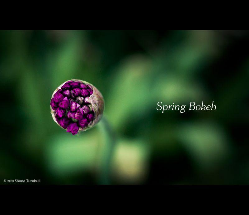 Spring Bokeh