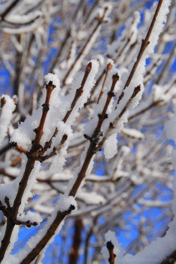 Sticky Snow 4