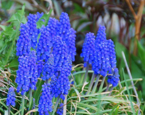 Morning Flower 5