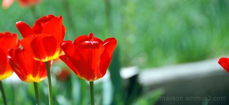 Spring Flower 7