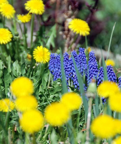 Spring Flower 10