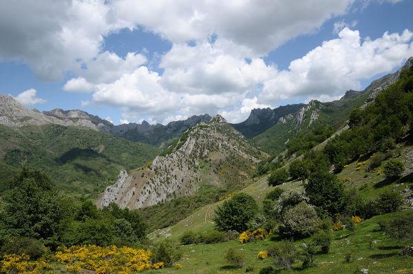 Tejedo Argovejo Cerroso