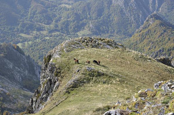 The wonderful world of horses 4