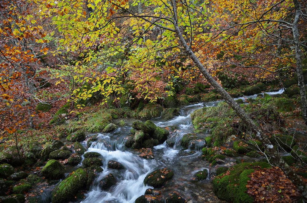 Agua bajo los árboles. Water under the trees. #1