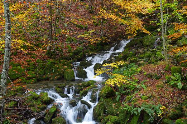 Agua bajo los árboles. Water under the trees. #67