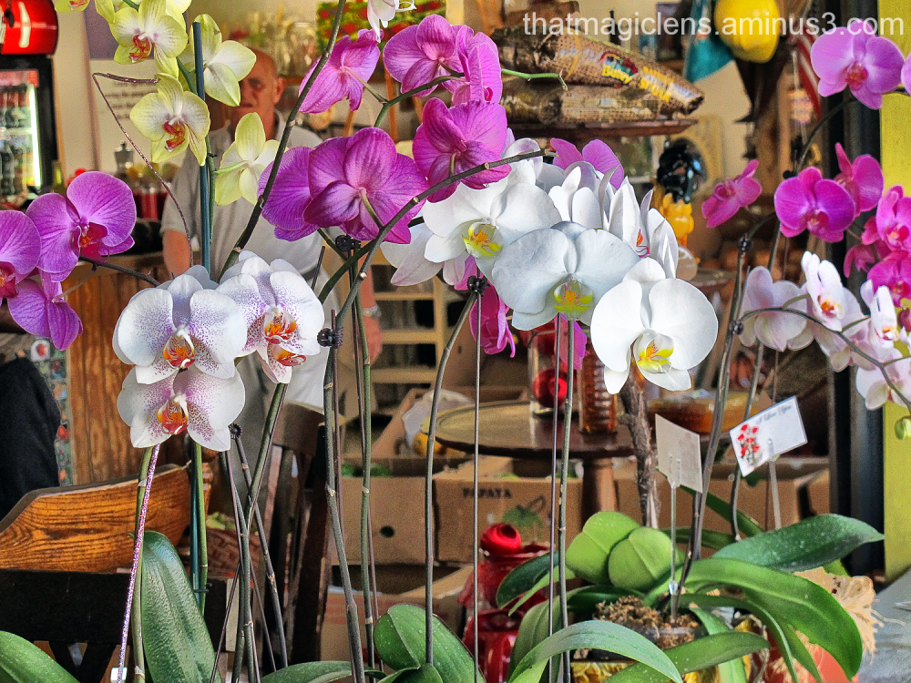 The Orchid Store