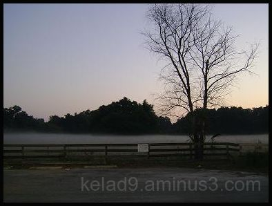 Foggy Field Early Morning