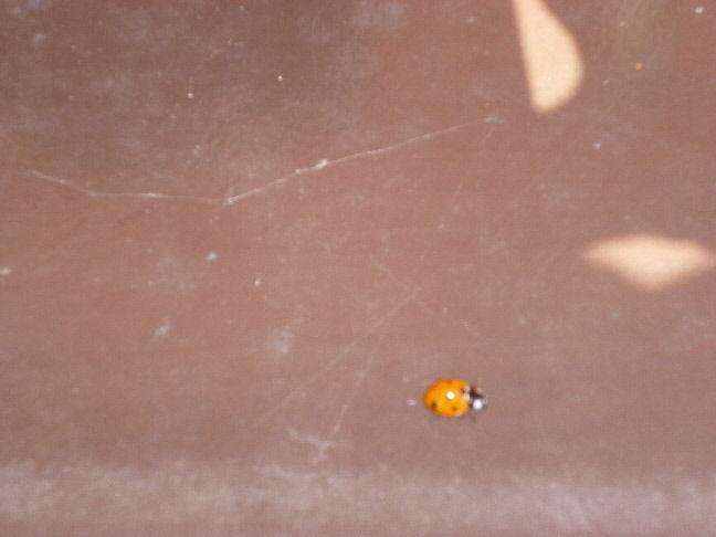 Ladybird...got him!