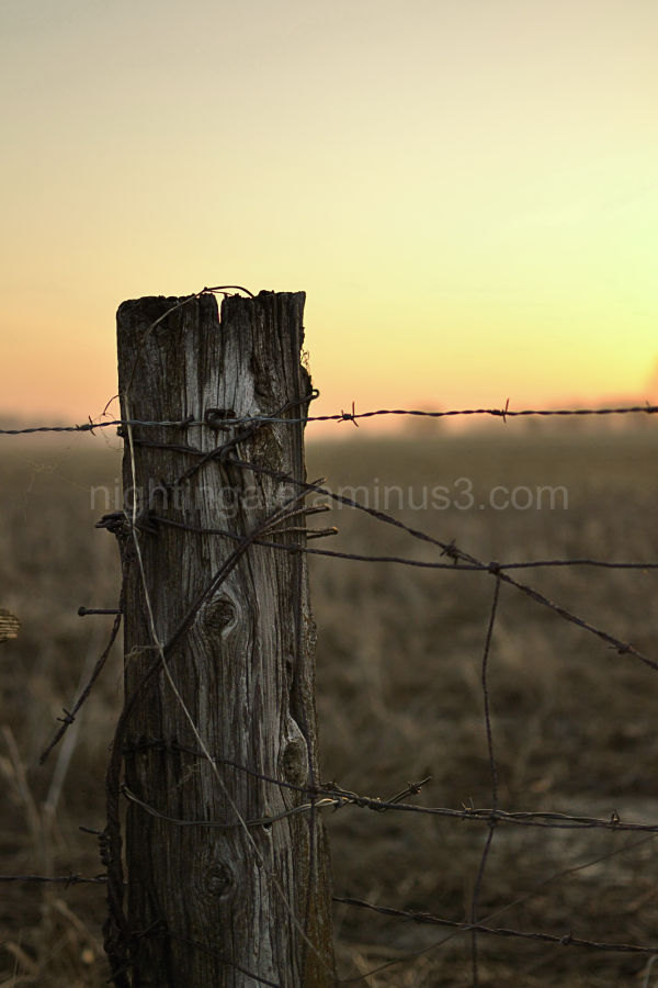 A wooden fencepost lit by the morning sunlight