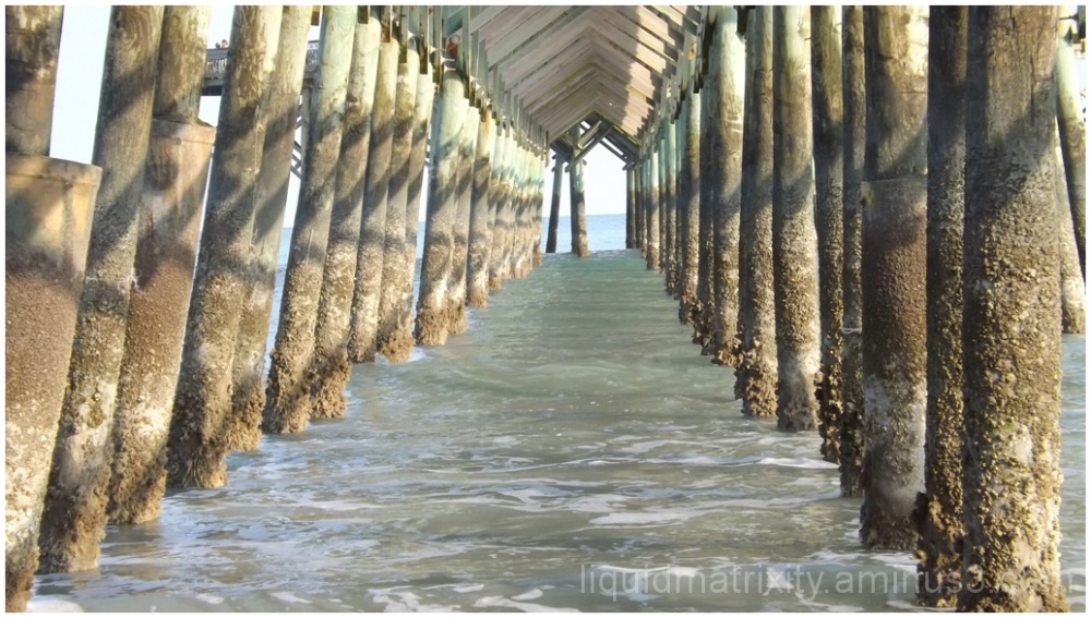 Under the Folly Beach Pier