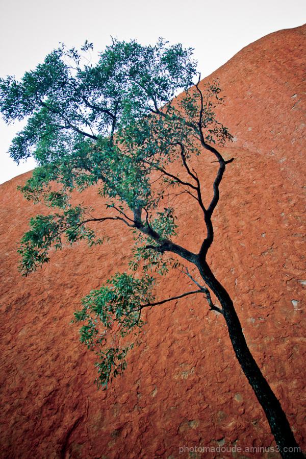 A l'ombre d'Uluru