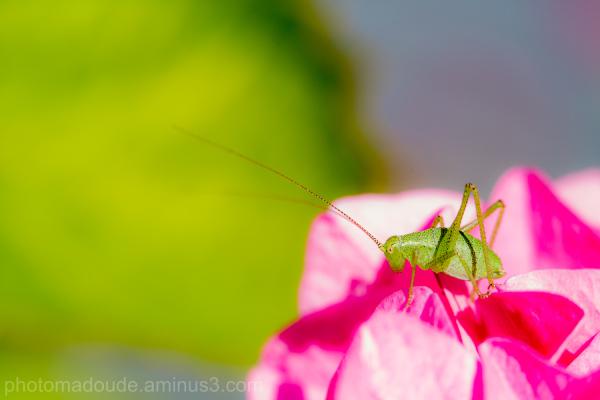 Green & Pink