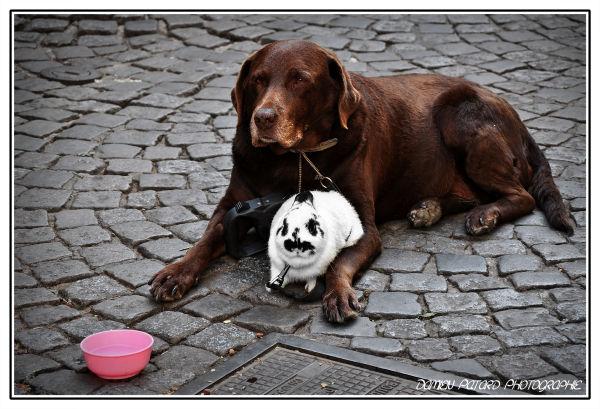 chien lapin rouen mendicité mendier aumône
