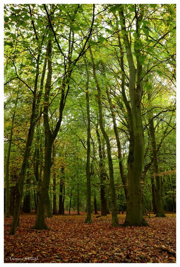 Forêt Montgeon Havre Automne couleurs