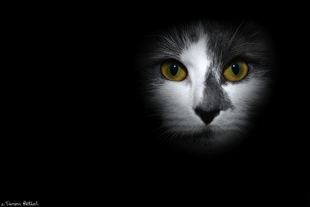 Kenzo chat cat photo gris blanc