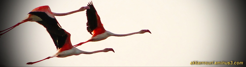 Magic wings colors...