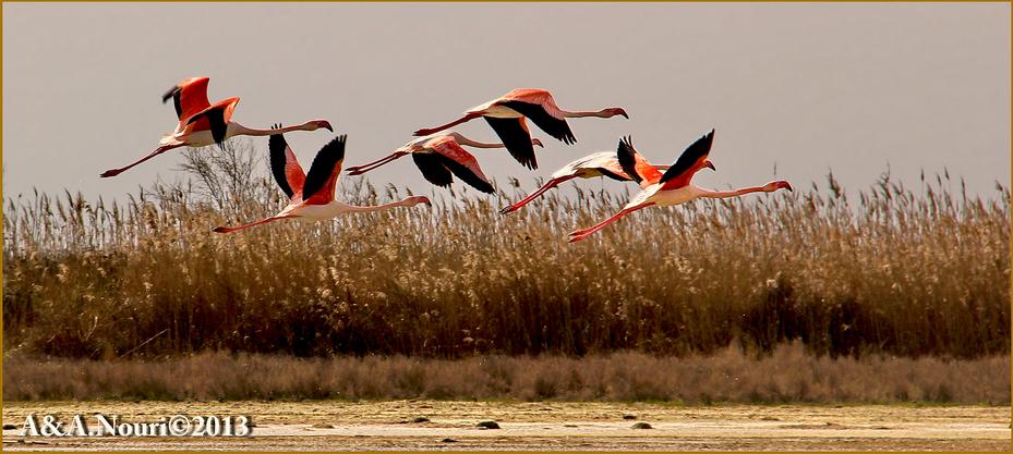 Flamingos' life story-10
