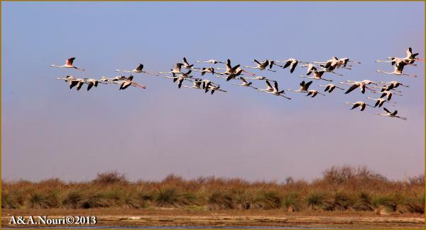 Flamingos' life story-6